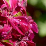 Цветя - Рязан цвят