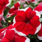 Много красиви цветя на един от входовете на южния парк